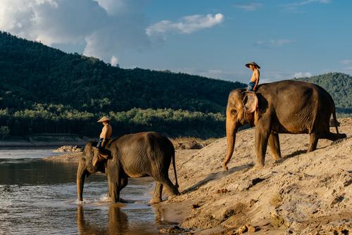 voyage laos elephant