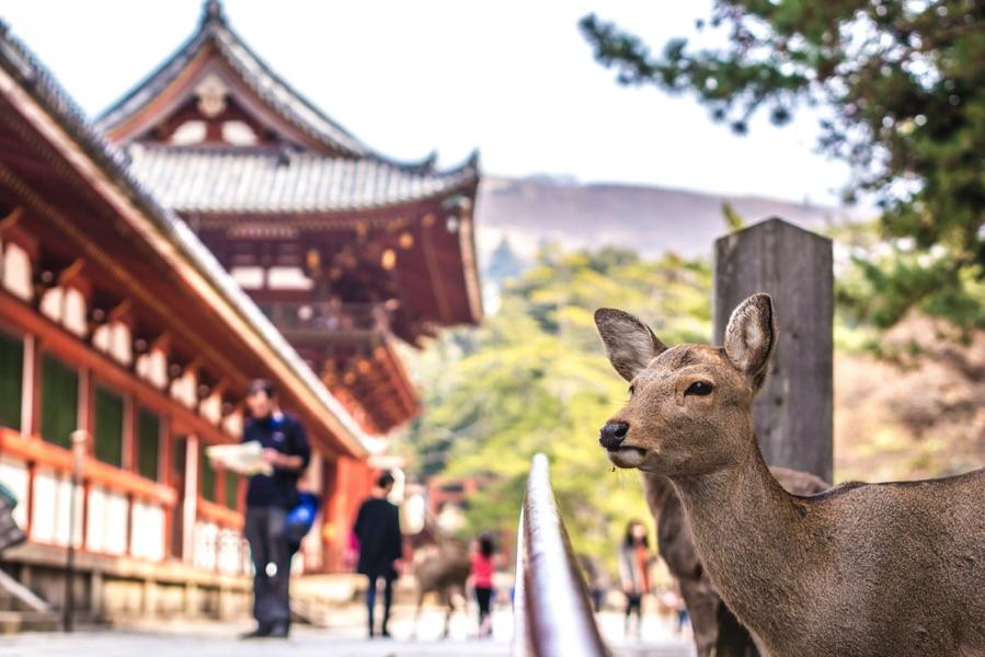 voyage au japon circuit