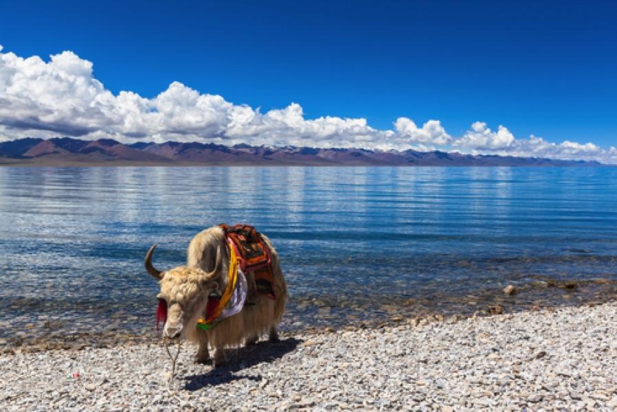 Tibet en groupe avec guide privé