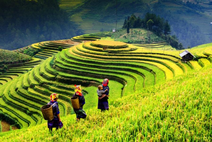visiter un champ de riz au Vietnam