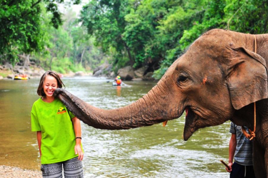 circuit thailande elephant